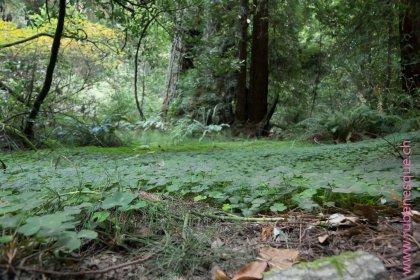 Muir Woods3